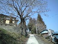 Sakuramachi